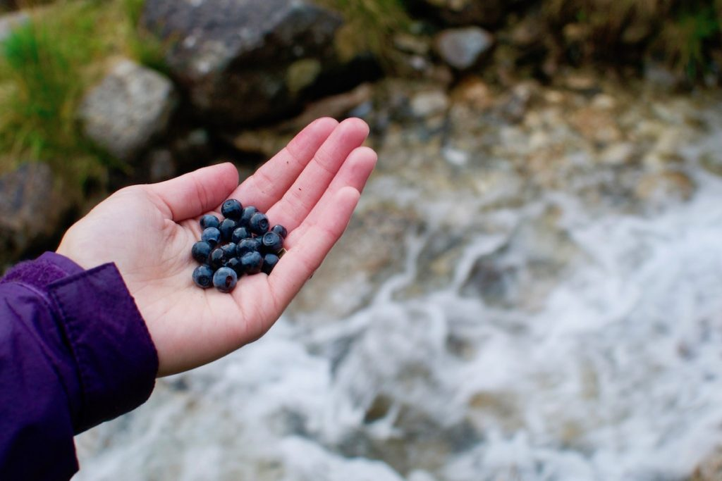 Sophie holds a handful of wild blueberries by a mountain stream in Austria