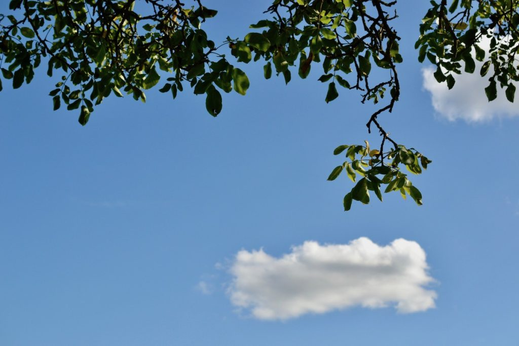 A cloudy blue sky with walnut trees leaves