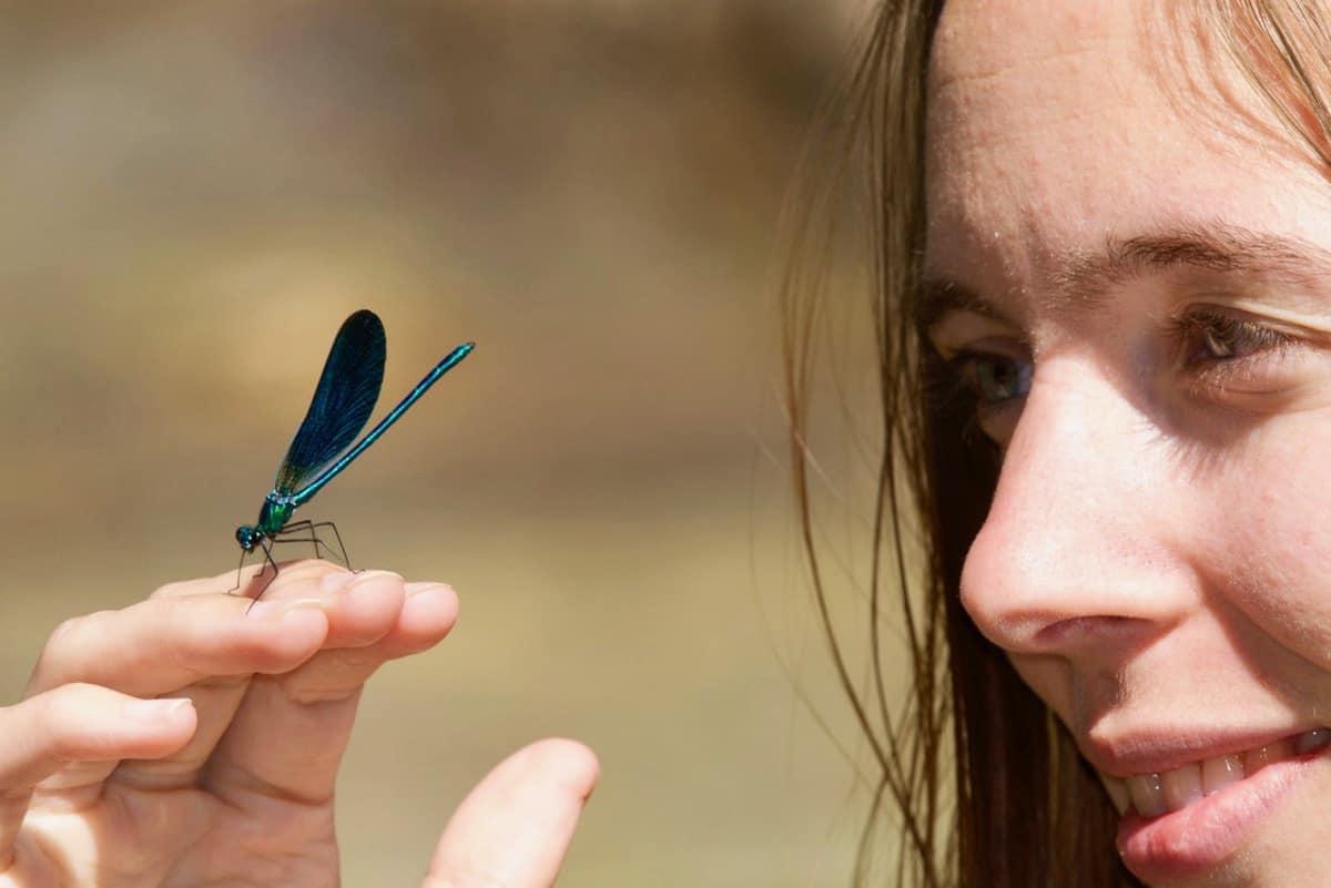 A blue damselfly on Sophie's fingertips