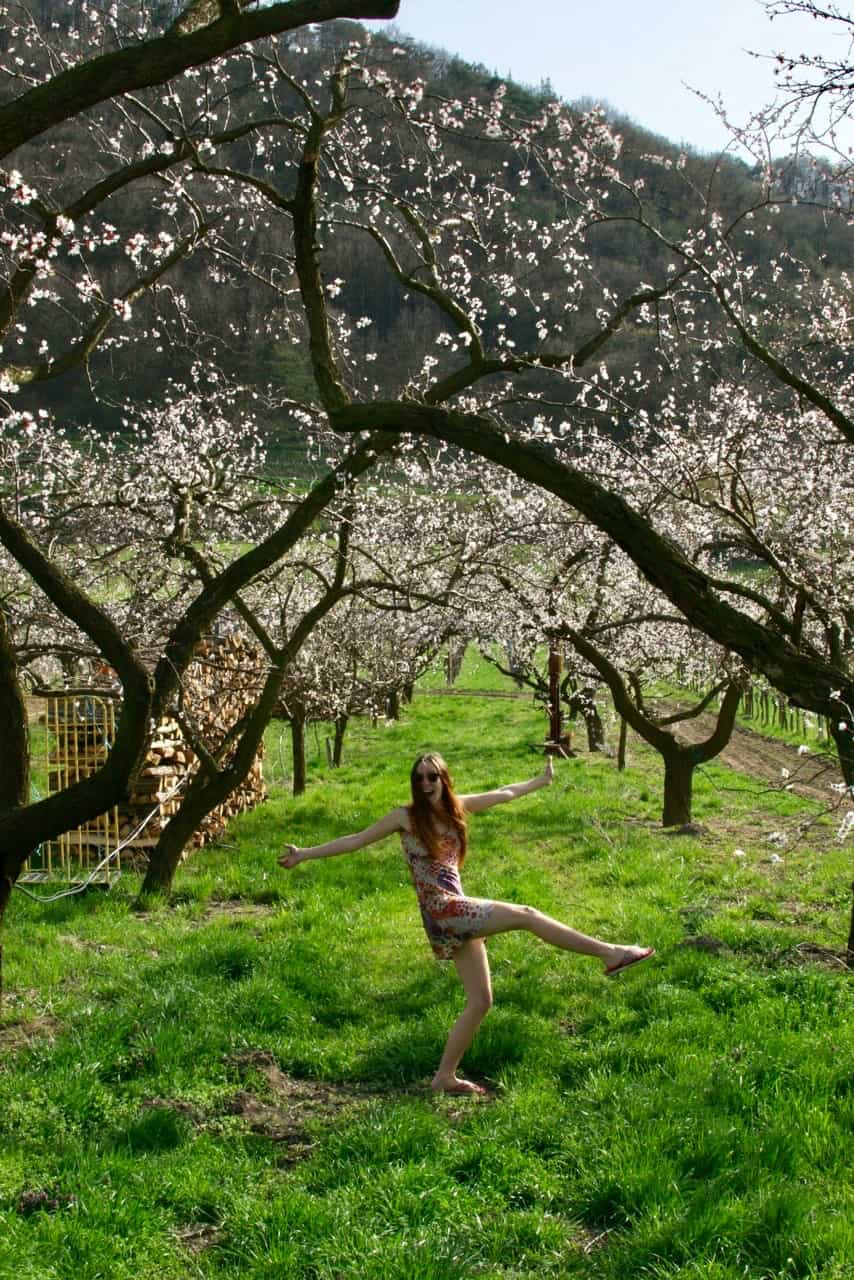 Dancing in a blossoming apricot tree filled meadow