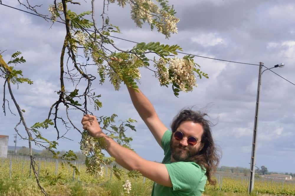 Paul picking acacia flowers