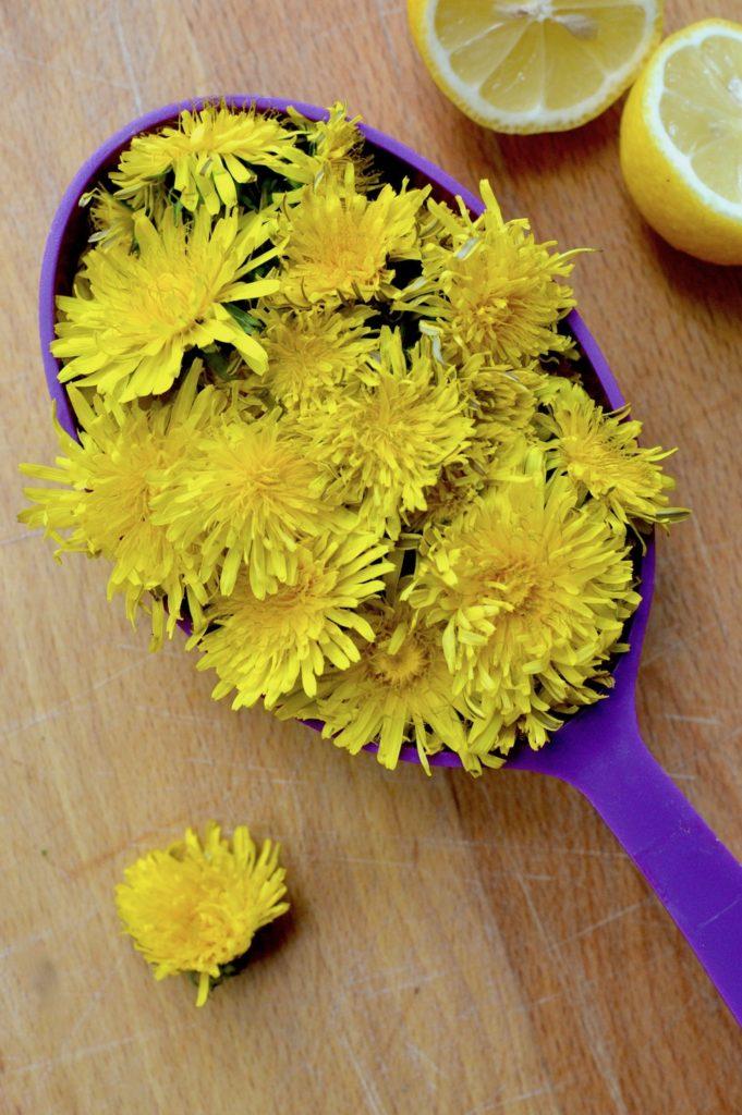A cup full of dandelion flower heads