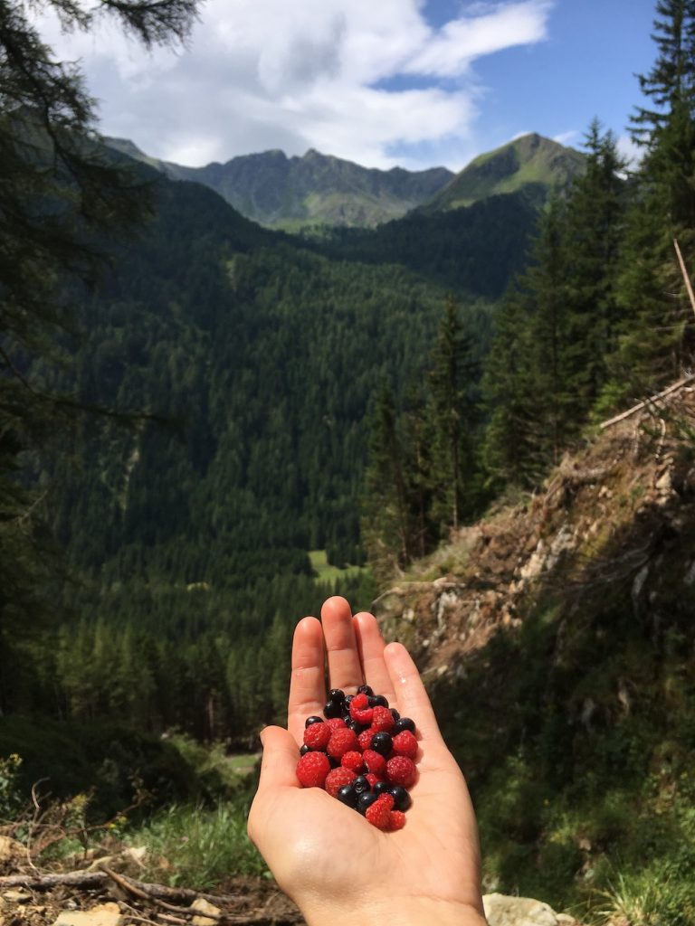 Enjoying the beautiful view of the mountains with a handful of wild berries