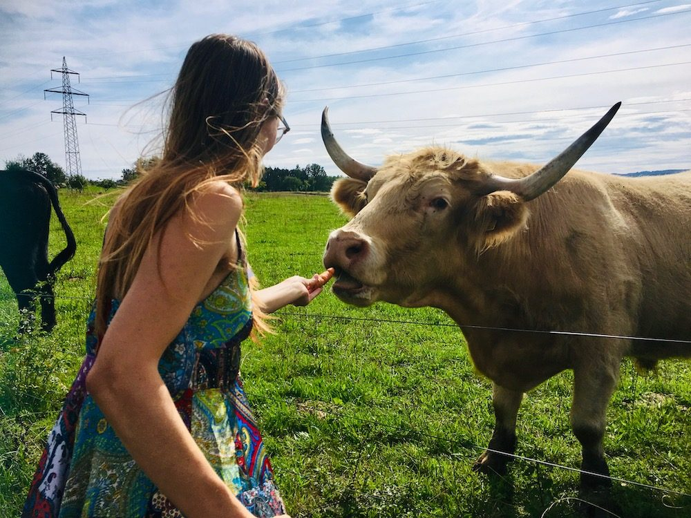 Sophie feeding a carrot to a cow