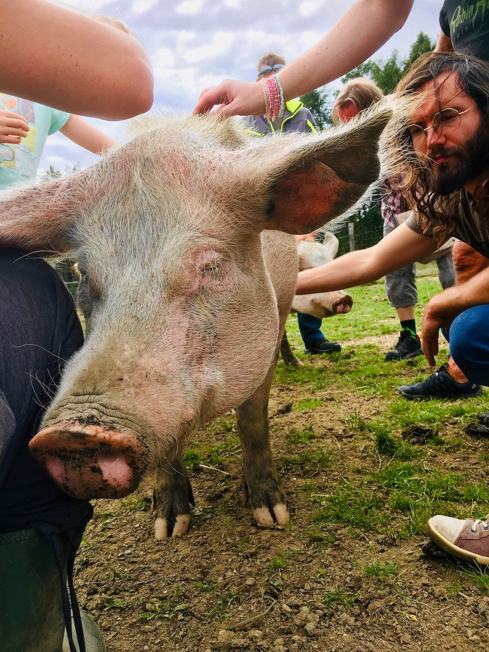 Stroking a pig at a sanctuary