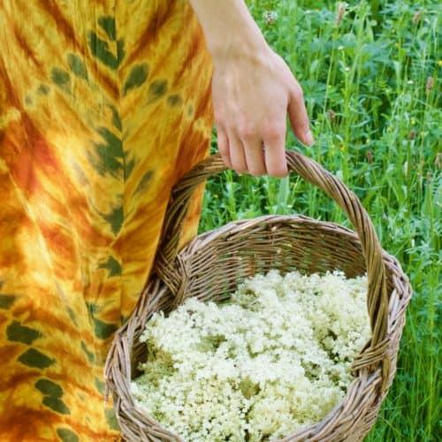 Walking in meadow with a basket full of elderflowers