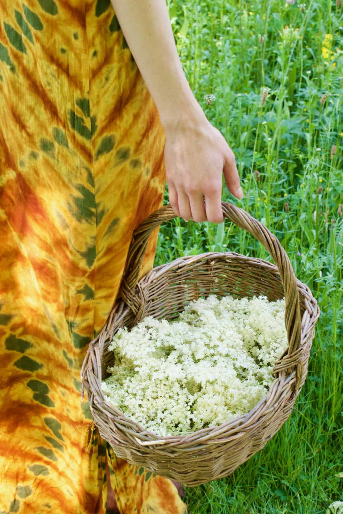 Walking in meadow with a basket full of elderflowers