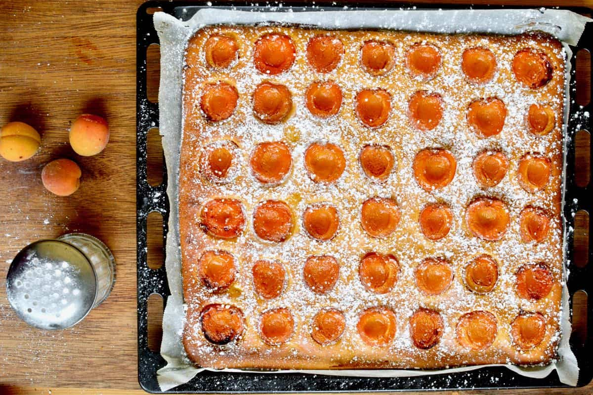 A large baking sheet of freshly baked cake. The cake has halved apricots baked into it on the top and is sprinkled with icinig sugar.